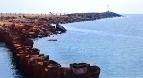 与棕榈树词根篱芭的海观点在karaikal海滩 免版税图库摄影