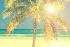 与棕榈树, Cayo Levisa古巴的晴朗的海滩 库存照片