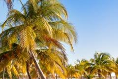 与棕榈树离开和太阳反射的自然本底 免版税库存图片