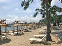 与棕榈树2的沙滩 库存图片