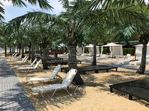 与棕榈树3的沙滩 免版税库存图片
