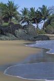 与棕榈的海滩,多巴哥 免版税图库摄影