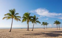 与棕榈的海滩 免版税图库摄影