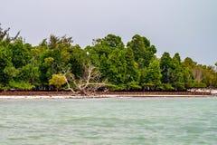 与棕榈的热带海岸线 免版税图库摄影