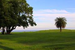 与棕榈的风景临近海洋 免版税图库摄影