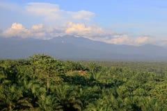 与棕榈种植园的山景 免版税库存图片