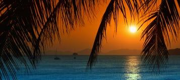 与棕榈leavs的日落 图库摄影