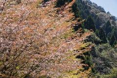 与棕色叶子的花 免版税图库摄影