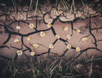 与棕色干燥高明的地面、花和绿草的背景 免版税库存照片