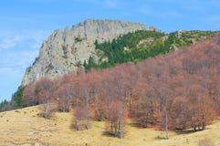 与棕色森林的石峭壁 库存照片