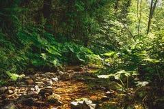 与棕色河床nad蜂斗菜的基于森林的小河 免版税库存照片