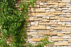 与棕色砖墙和绿色泥鳅的纹理在左边 库存图片
