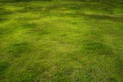与棕色纹理的绿草领域 免版税库存照片