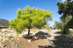 与棘手的分支特写镜头的树 库存图片
