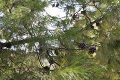 与棘手的分支特写镜头的树 免版税库存照片