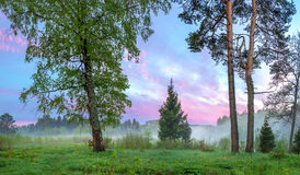 与森林、一个草甸和雾的夏天农村风景在日出 库存图片