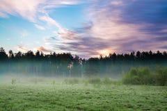 与森林、一个草甸和雾的夏天农村风景在日出 免版税库存照片