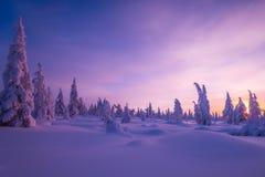 与森林、多云天空和太阳的冬天风景 免版税库存照片