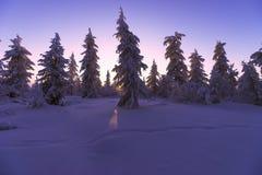 与森林、多云天空和太阳的冬天风景 免版税图库摄影