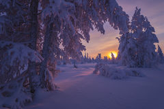 与森林、多云天空和太阳的冬天风景 免版税库存图片