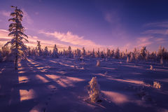 与森林、多云天空和太阳的冬天风景 库存图片