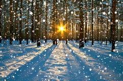 与森林、太阳和雪的冬天农村风景 免版税库存照片