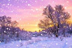 与森林、树和日出的冬天风景 免版税库存图片