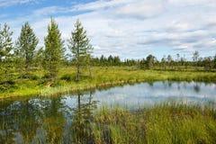 与森林、湖和沼泽的美好的夏天风景 免版税库存图片