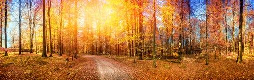 与森林公路的秋天风景在橙色口气 免版税库存图片