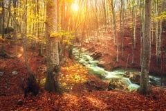 与森林和山河的五颜六色的秋天风景 库存图片