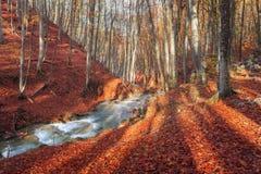 与森林和山河的五颜六色的秋天风景 免版税库存照片