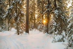 与森林和日落的冬天风景 免版税库存图片