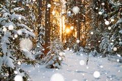 与森林和日落的冬天风景 免版税图库摄影