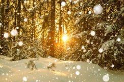 与森林和日落的冬天风景 图库摄影