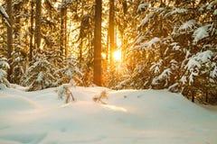 与森林和日落的冬天风景 库存照片