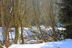 与森林和河的冬天风景 免版税库存图片