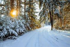 与森林和路的冬天风景 免版税库存照片