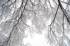 与森林和雪的农村冬天风景 免版税图库摄影