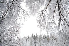 与森林和雪的农村冬天风景 库存照片