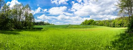 与森林和领域的夏天风景 库存图片