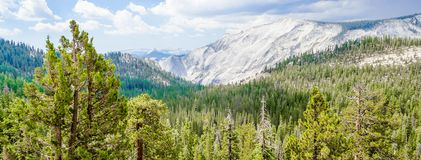 与森林在优胜美地国家公园,美国的美丽的绿色山谷 图库摄影