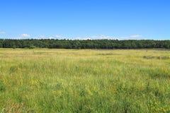 与森林天际的,夏天风景的绿色领域 免版税库存图片