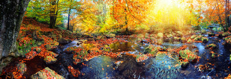 与森林小河的全景秋天风景 秋天自然backg 免版税库存图片