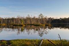 与森林湖的风景在拉脱维亚 免版税库存图片
