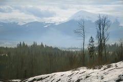 与森林的冬天山 免版税库存照片