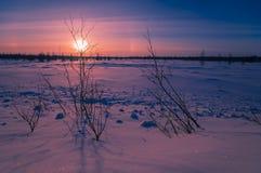 与森林的冬天风景、多云天空和太阳和光晕 免版税库存图片