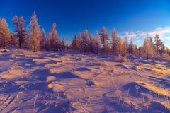 与森林的冬天风景、多云天空和太阳和光晕 库存图片