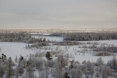 与森林的冬天landskape在晚上日落的雪的 北部 免版税库存图片