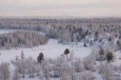 与森林的冬天landskape在晚上日落的雪的 北部 免版税图库摄影