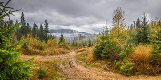 与森林的多雨风景 免版税库存图片